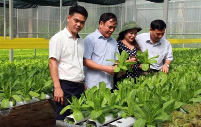 Hướng đi mới cho người trồng rau sạch