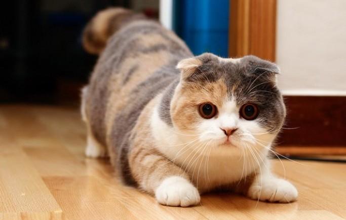 Nằm mơ thấy bị mèo cắn nên chơi xổ số con gì may mắn